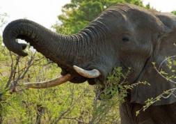 Première mondiale : un éléphant porte une lentille de contact !