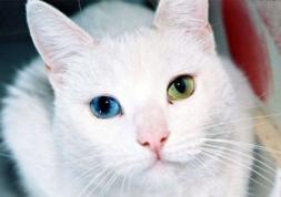 Les lentilles œil de chat : un regard félin qui fait sensation