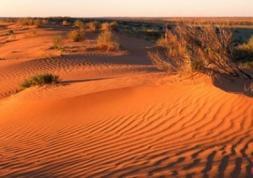 Perdu dans le désert, il survit grâce au produit à lentilles !