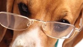 Insolite : un centre ophtalmologique pour animaux !